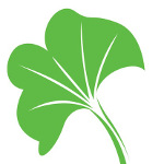 The Ginkgo Leaf in Our Logo